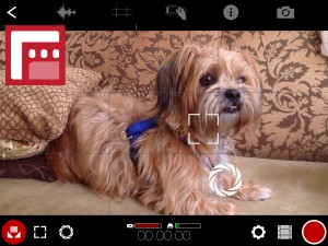 screenshot of dog shot through video grid