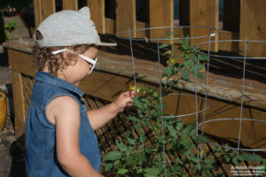 three year old with tomato plants
