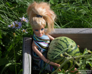 Barbie doll with watermelon in garden